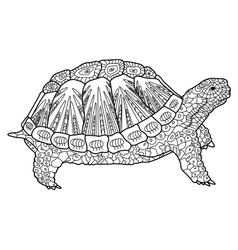 Turtle coloring book for adults vector image vector image