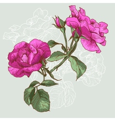 Beautiful Seamless Rose Background vector image