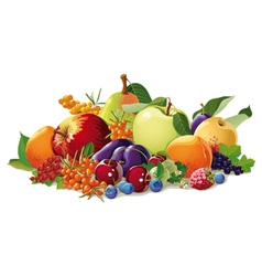 still life of fruit and berries vector image vector image