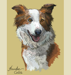 Border collie red color vector