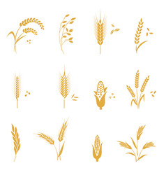 Cereals icon set with wheat vector