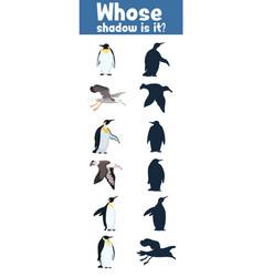 Guess where whose shadow antarctica birds flat vector