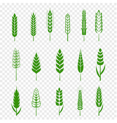 set simple green wheats ears icons and wheat vector image
