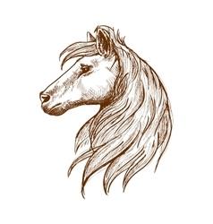 Wild horse head with flowing mane vintage sketch vector