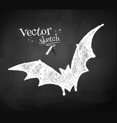 Chalkboard drawing of bat vector image