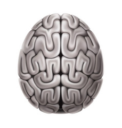 human brain anatomy structure 3d icon vector image