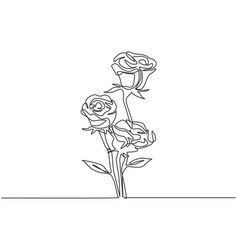 one single line drawing fresh beautiful rose vector image