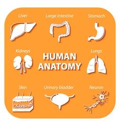 Set icons with shadow Human anatomy vector image vector image