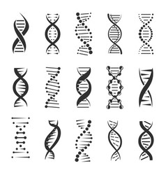 double dna helix icons vector image