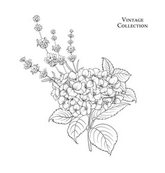 Floral garland of hydrangea vector