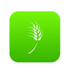 Grainy wheat icon green vector