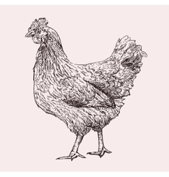 Hen Hand Drawn vector image