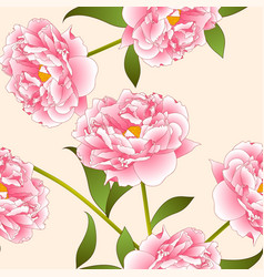 Pink peony flower on beige ivory background vector