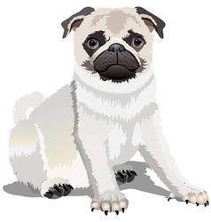 pug2 vector image