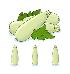 Zucchini Courgette Vegetable vector
