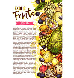 Exotic fruit banner with tropical berry border vector