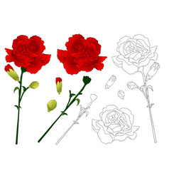 red carnation flower vector image
