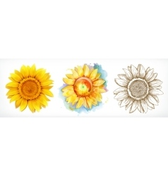 Sunflower different styles drawing icon vector image vector image
