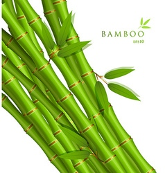 Background with green bamboo vector image