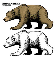 hand drawing style of brown bear vector image vector image