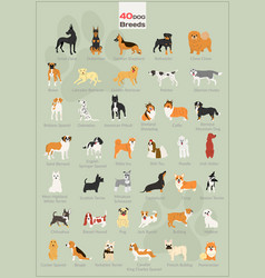40 dogs in action set vector image