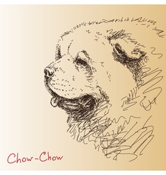 Chow-chow dog vector