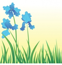 flowers iris vector image