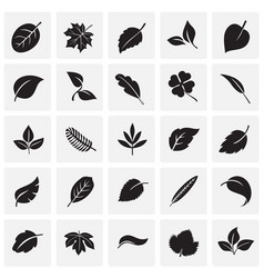 leafs icon set on squares background for graphic vector image