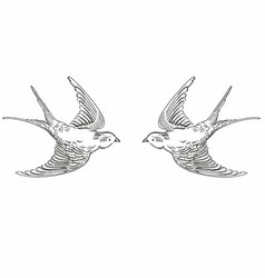 sketch flying contour birds vector image