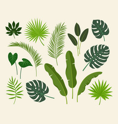 tropical exotic plants leaves set vector image