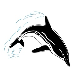 Jumping dolphin isolated on white background vector image