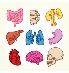 Human organs isolated icons vector image