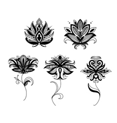 Indian and persian paisley flowers vector image vector image