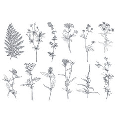 Collection hand drawn flowers and herbs vector