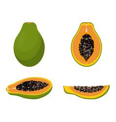set with papaya vector image