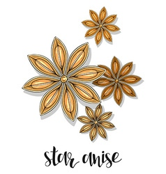 Star anise isolated object sketch Spice for food vector image