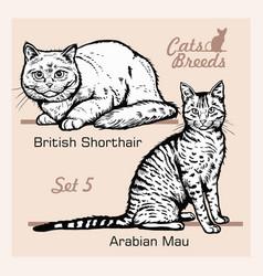 Cat breeds - arabian mau british shorthair vector