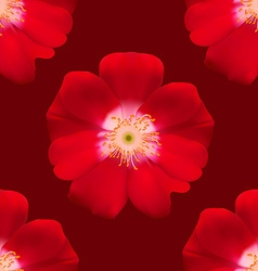 Red Primula vector