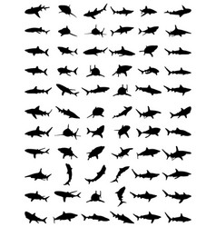 silhouettes sharks vector image