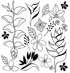 tropical flower doodle sketch vector image
