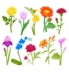 beautiful watercolor flower set handmade style vector image vector image