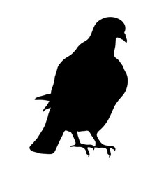 black silhouette of sitting dove on white vector image