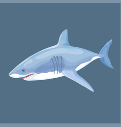 Real shark swims isolated vector