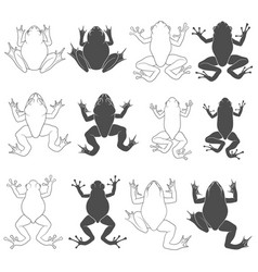 set of with tree and river frogs vector image