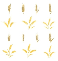 Wheat ears and seed vector image vector image