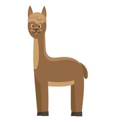 cartoon lama a cute lama vector image