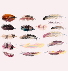 Collection of feathers in pink soft colors vector
