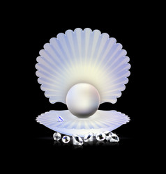dark white pearl and shell vector image vector image
