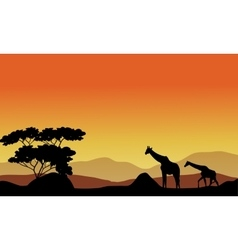 the giraffes on the hills vector image
