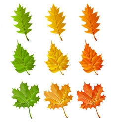 set of autumn season leaves vector image vector image